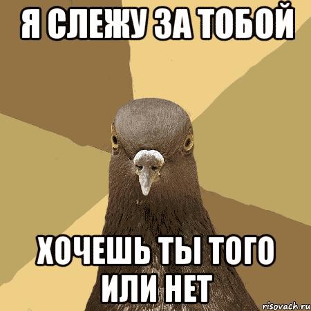 голубь